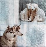 Ours polaires et chiens huskies