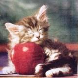 chaton qui dort sur une pomme boutique. Black Bedroom Furniture Sets. Home Design Ideas