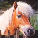 Beau portrait de poney